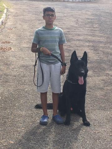 Venda de cães adestrados para Guarda Belo Horizonte - Foto 2