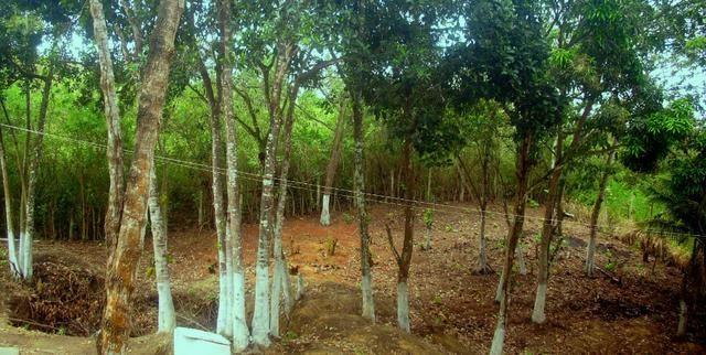 Terreno 450 m2 Condomínio Vale do Jacarandá - Foto 17