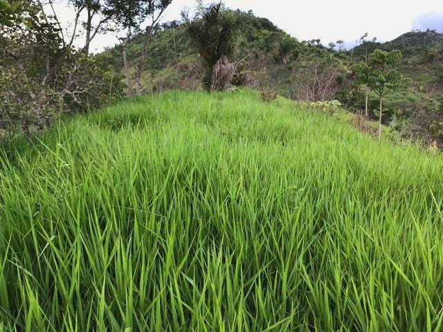 Fazenda 300 hec no Maranhão - Foto 5