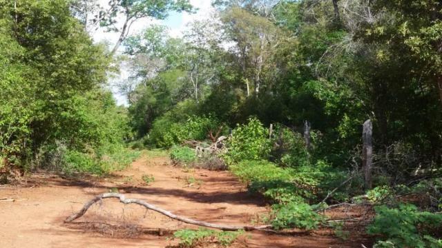 Fazenda à venda, 150000000 m² por R$ 55.809.000,00 - Zona Rural - Pilão Arcado/BA - Foto 7