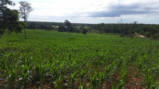 Fazenda à venda, 150000000 m² por R$ 55.809.000,00 - Zona Rural - Pilão Arcado/BA - Foto 2