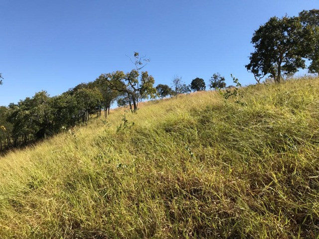 Fazenda 65 Ha em Onça de Pitangui - MG - Foto 11