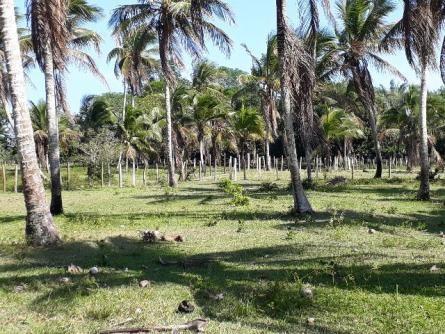 Fazenda 85 hec Vendo com Porteira Fechada - Foto 8