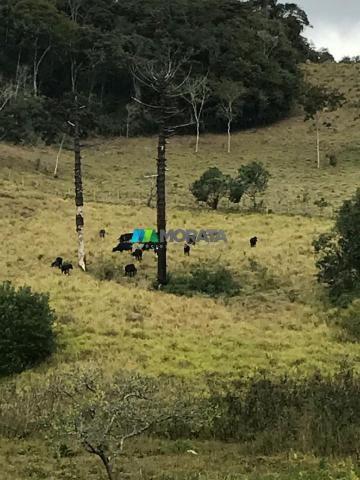 Fazenda à venda - 40 hectares - região santana dos montes (mg) - Foto 16