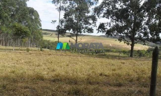 Fazenda pecuária - 220 hectares - belo vale (mg) - Foto 3