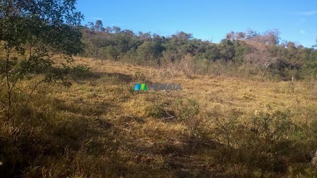 Fazenda à venda - 40 hectares - lavras (mg) - Foto 7