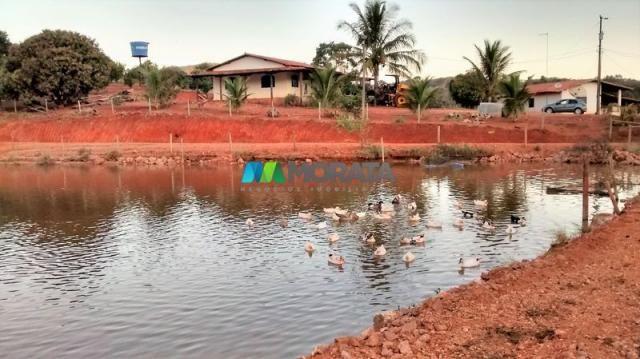 Fazenda à venda - 75 hectares - onça do pitangui (mg) - Foto 3