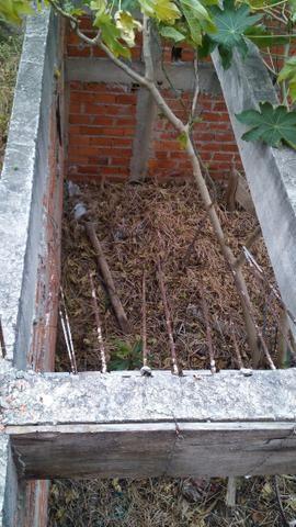 Terreno Vila Amato com construção - Foto 5