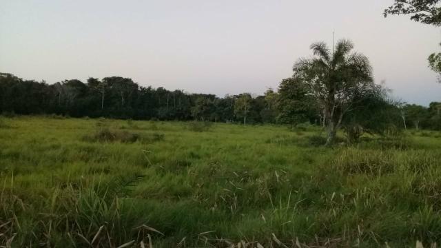 Fazenda 80 hectares próximo a Cuiabá
