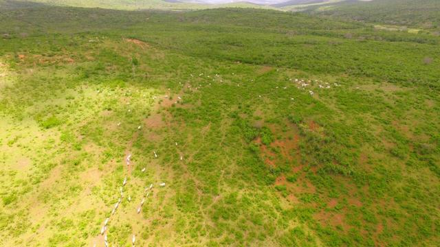 Fazenda Jaguaquara - Foto 14