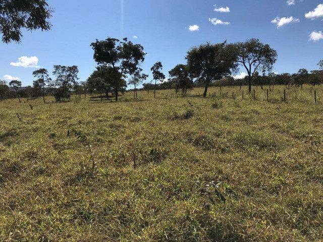 Fazenda 65 Ha em Onça de Pitangui - MG - Foto 15