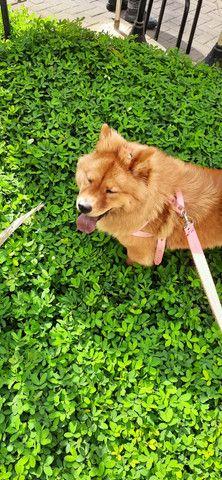 Para cães e gatos: Visitação, passeio e hospedagens.