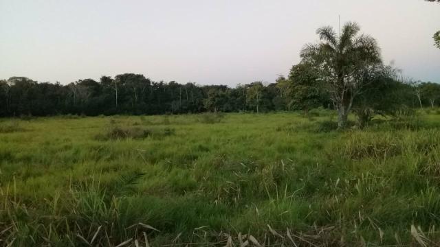 Fazenda 80 hectares próximo a Cuiabá - Foto 10