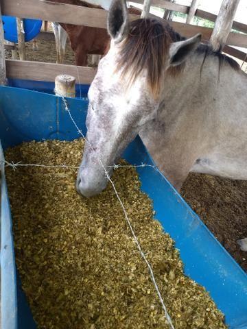 Silagem de milho ensacada - Foto 3