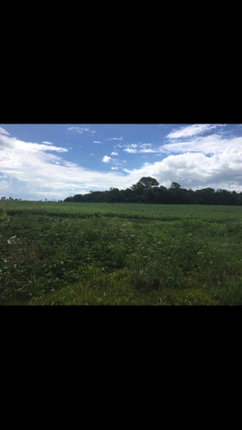 Chácara localiza no município de Antônio João - Foto 5