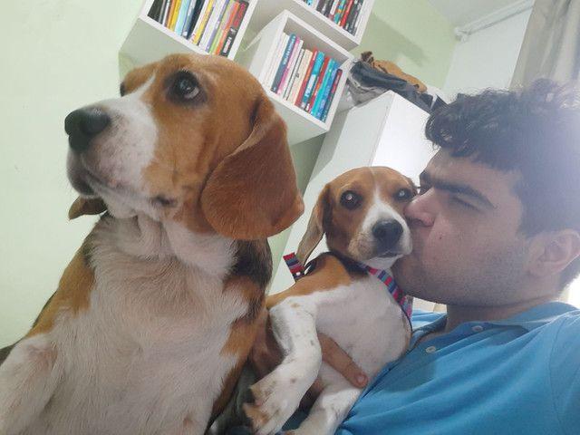 Para cães e gatos: Visitação, passeio e hospedagens. - Foto 6