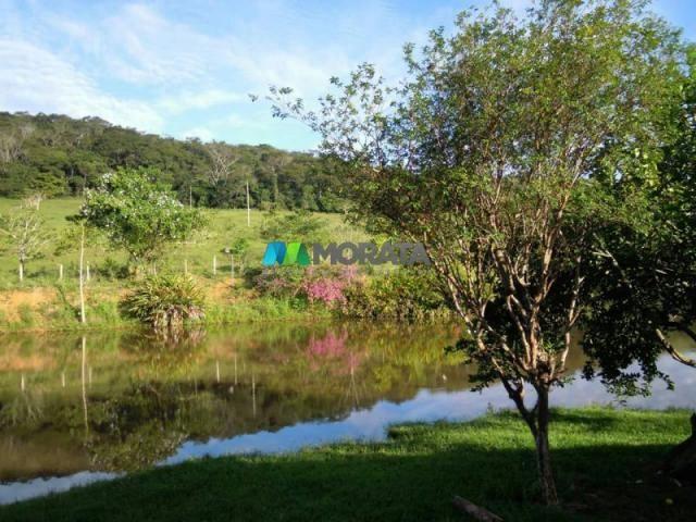 Fazenda / haras à venda - 100 hectares - rio casca (mg) - Foto 3