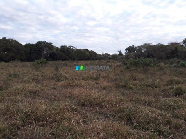 Fazendinha - 08 hectares - paraopeba (mg) - Foto 9