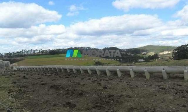 Fazenda pecuária - 220 hectares - belo vale (mg) - Foto 4