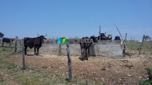 Fazenda - 80,70 hectares - congonhas do norte (mg) - Foto 14
