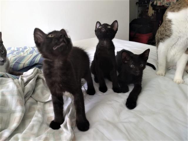 Gatinhos machos de 2 meses para adoção - Foto 3