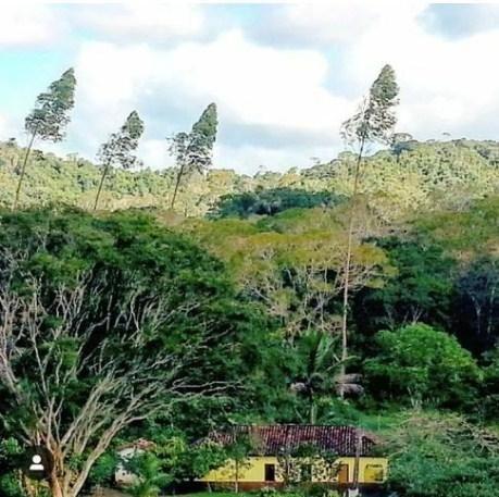 Lindíssima fazenda de cacau , 500 ha (cabruca, mata atlântica) - Foto 6