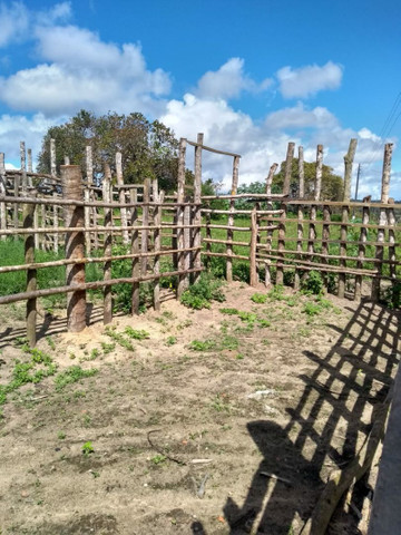 Arrendamento de fazenda - Foto 3