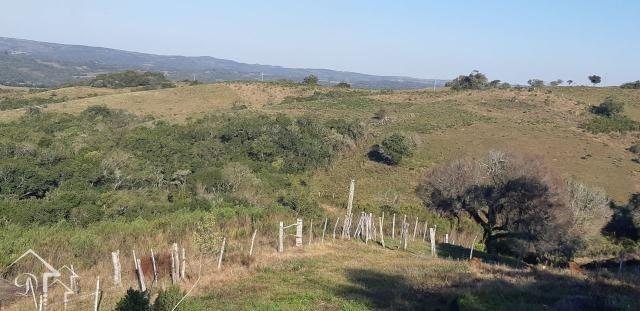 Chácara à venda com 3 dormitórios em Zona rural, Pinheiro machado cod:10115 - Foto 15