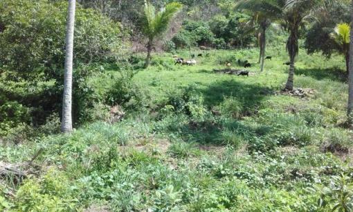 Rancho em Vitoria de Sto Antão - Foto 4