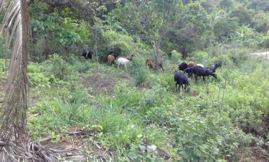 Rancho em Vitoria de Sto Antão - Foto 2