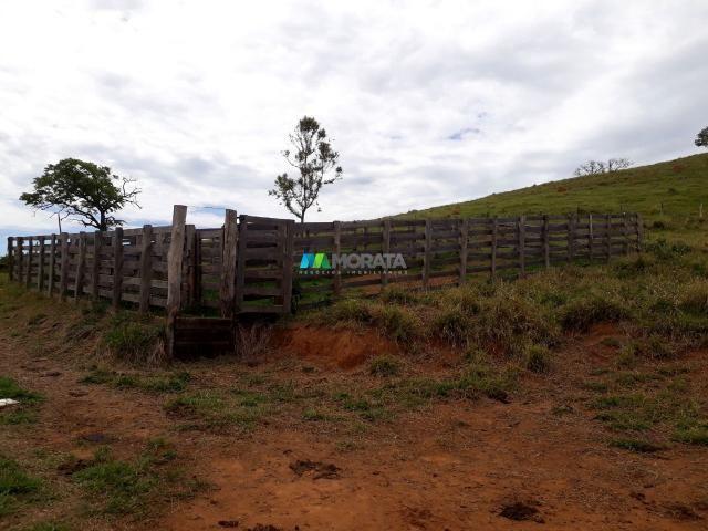 Fazenda à venda - 90 hectares - lavras (mg) - Foto 11
