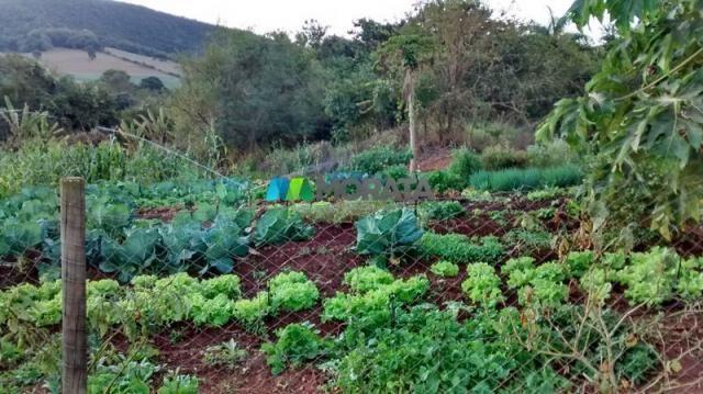 Fazenda à venda - 75 hectares - onça do pitangui (mg) - Foto 15