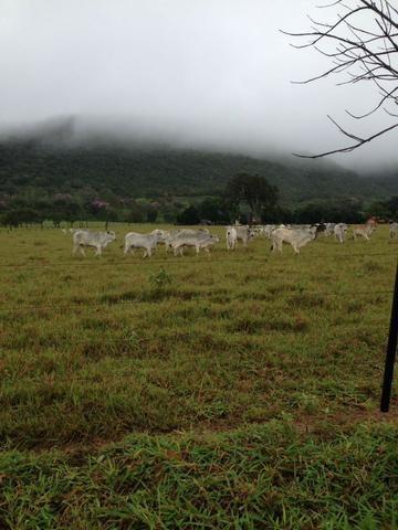 Fazenda - 1100 Hectares - Cáceres/MT - Foto 17