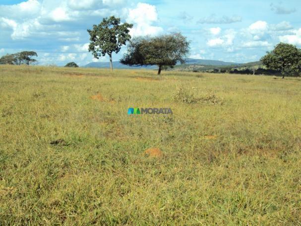 FAZENDA À VENDA - 300 HECTARES - PITANGUI (MG) - Foto 2