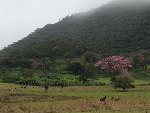 Fazenda - 1100 Hectares - Cáceres/MT - Foto 20