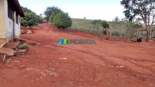 Fazenda à venda - 75 hectares - onça do pitangui (mg) - Foto 13