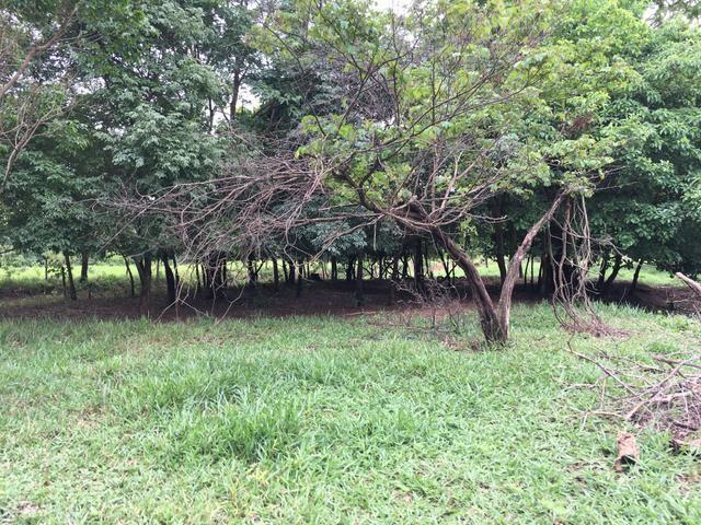 Chácara em Bela Vista de Goiás com casa - Foto 12