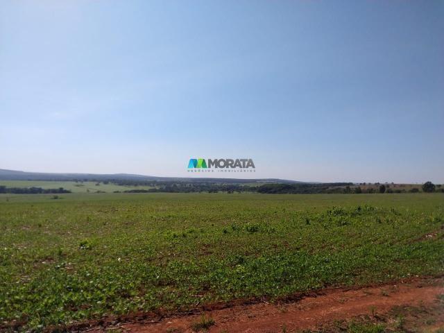 FAZENDA A VENDA - 300 hectares - REGIÃO PITANGUI (MG) - Foto 2