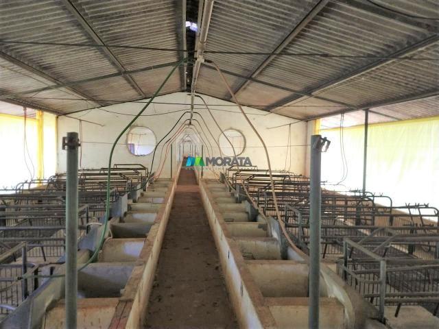 FAZENDA A VENDA - 300 hectares - REGIÃO PITANGUI (MG) - Foto 18