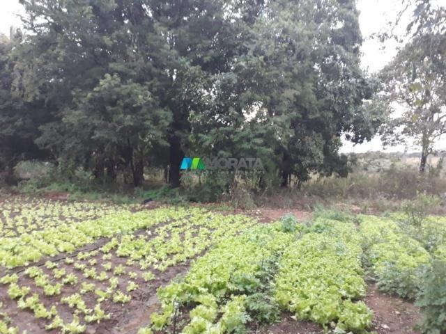 Fazendinha - 08 hectares - paraopeba (mg) - Foto 3