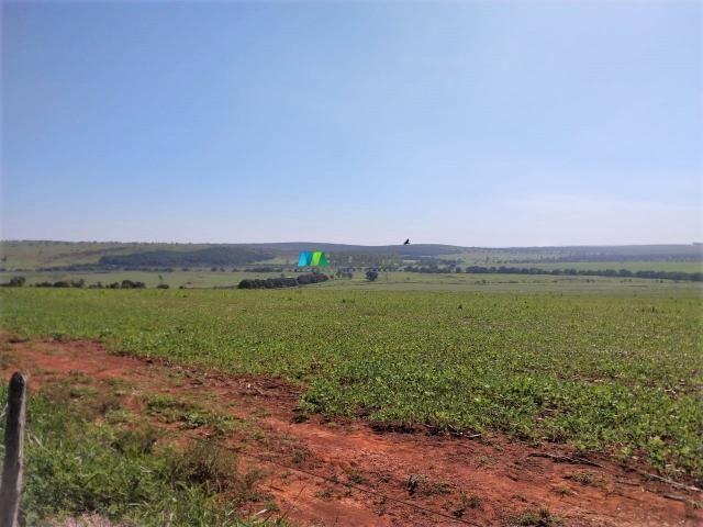 FAZENDA A VENDA - 300 hectares - REGIÃO PITANGUI (MG) - Foto 3