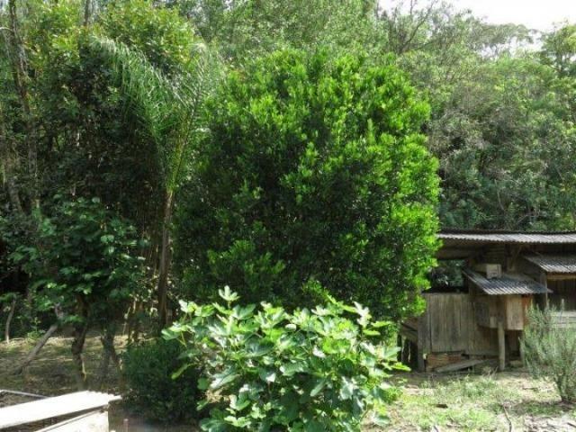 Chácara para Venda, 71.959,20 m², Piên / PR, bairro Poço Frio, 3 dormitórios - Foto 19