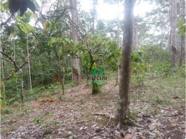 Linda fazenda à venda, 8000000 m² por r$ 6.300.000 - inocoop - itamaraju/ba - Foto 16