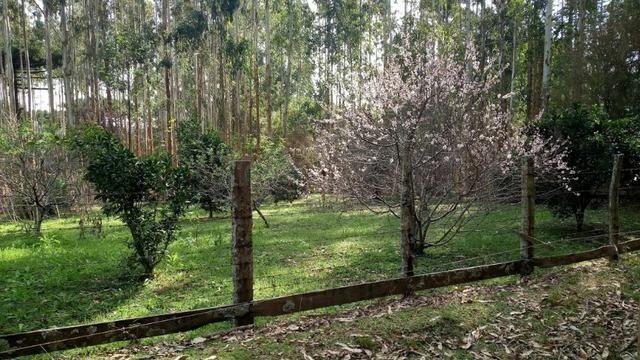 Chácara Manduri BR 373 Prudentópolis-Pr - Foto 16