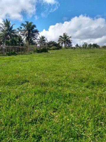Arrendamento de fazenda - Foto 6