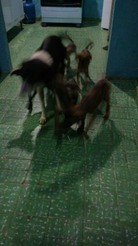 Doação de filhote de cachorro - Foto 3