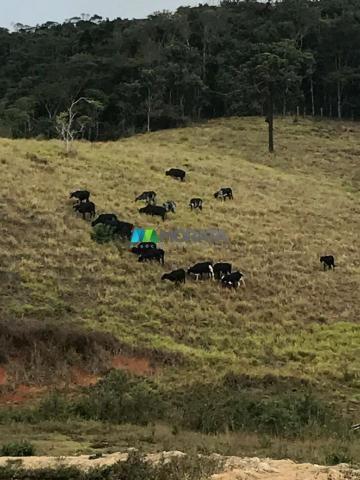 Fazenda à venda - 40 hectares - região santana dos montes (mg) - Foto 14