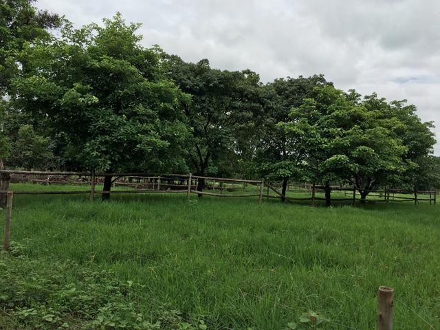 Chácara em Bela Vista de Goiás com casa - Foto 9