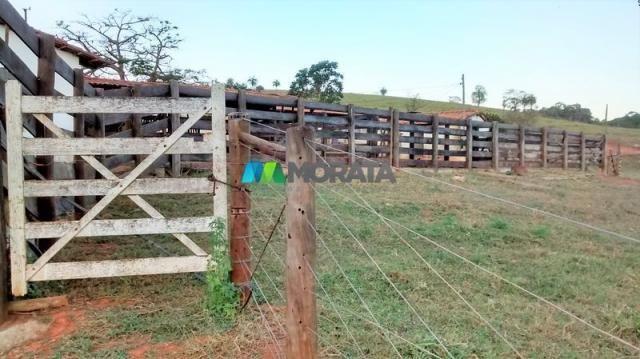 Fazenda à venda - 75 hectares - onça do pitangui (mg)