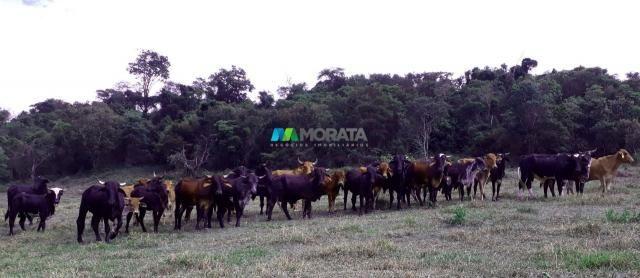 Fazenda à venda - 90 hectares - lavras (mg) - Foto 15